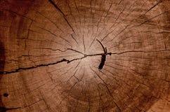 Wood korntextur av den gamla trädstubben med sprickor i brun signal f royaltyfri fotografi