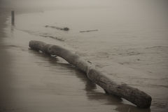 Wood lägga för driva i sanden på stranden - lagerföra fotoet Royaltyfri Foto