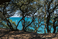 Wood of la Chaise in Noirmoutier & x28;France& x29;. The shady Wood of la Chaise in the Noirmoutier coast & x28;France& x29 royalty free stock photography