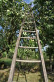 Wood ladder in aple tree Stock Photography