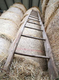 wood ladder in the barn of the farm Stock Photo