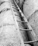 wood ladder in the barn of the farm Royalty Free Stock Photos