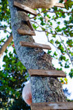 Wood ladder on tree Royalty Free Stock Images