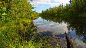 Wood lake. Beautiful lake in the wooden forest Royalty Free Stock Photos