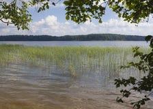 Wood lake. Royalty Free Stock Image