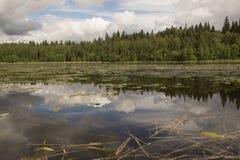 Wood lake. Stock Photos
