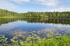 Wood lake Royalty Free Stock Photo