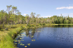 Wood lake. With floating lilies in which the blue sky is reflected royalty free stock photos