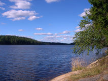 Wood lake. In summer Royalty Free Stock Photography