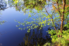 Wood lake. Dark blue motionless smooth surface of wood lake with the trees reflected in her in spring day stock photography