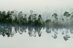 Wood lake coast in a fog Royalty Free Stock Photos