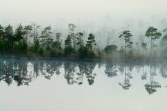 Wood lake coast in a fog Royalty Free Stock Photos