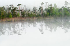 Wood lake coast in a fog Royalty Free Stock Images