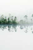 Wood lake coast in a fog stock photos