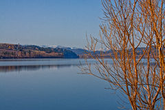 Wood Lake Landscape. Wood lake reflections framed by a bare tree Royalty Free Stock Photography