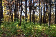 Wood landscape Stock Image
