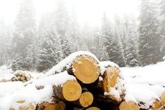 Wood landscape Stock Photography
