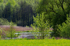 Wood landscape. River landscape in wood in the spring Royalty Free Stock Images