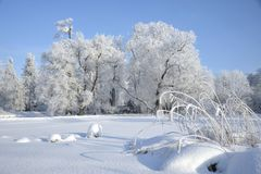 Wood landscape in the winter. Wood landscape in frosty sunny day in the winter Stock Photo