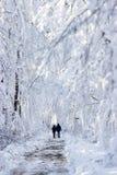 Wood landskap för vinter arkivbild