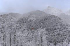 Wood landskap för vinter Arkivfoto