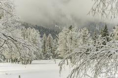 Wood landskap för vinter Arkivbilder