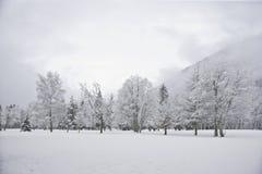 Wood landskap för vinter Fotografering för Bildbyråer