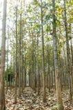 wood lantgård för teakträ arkivfoto