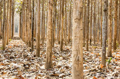 wood lantgård för teakträ Royaltyfri Fotografi