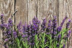 Wood lavendel blommar bakgrund Royaltyfria Foton