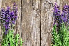 Wood lavendel blommar bakgrund arkivfoton