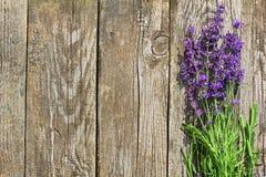 Wood lavendel blommar bakgrund Royaltyfri Foto