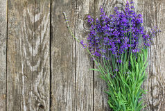 Wood Lavender Flowers Background. Lavender flowers in front of an old wood fence background Stock Photo