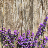 Wood Lavender Flowers Background. Lavender flowers in front of an old wood fence background Stock Photos