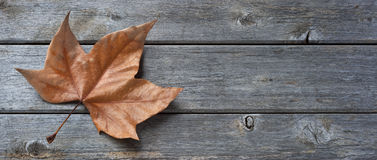 Wood Leaf Banner Background. A panorama of an old leaf resting on an old wood background Royalty Free Stock Photos