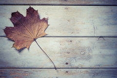 Wood Leaf Banner Background Royalty Free Stock Photography