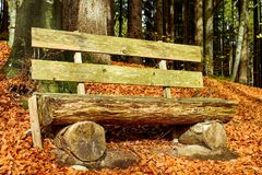 Wood, Leaf, Bench, Woodland royalty free stock photos