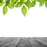 Wood and leaf on white Stock Photography