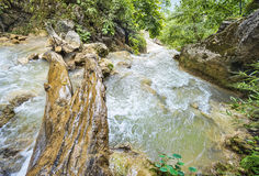 Wood log across rapid mountain river Royalty Free Stock Photography
