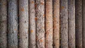 Wood log background textured pattern plank wall Royalty Free Stock Images
