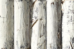 Wood Log Background, White Colored Wooden Planks, Textured Bark Royalty Free Stock Photos