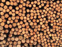 Wood log bundle group Royalty Free Stock Photos