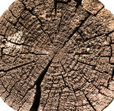 Wood log cut Royalty Free Stock Photo