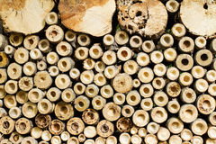 Wood log and cut bamboo surface Stock Photo