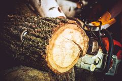 Wood Log Cut Stock Photo