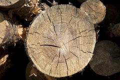 Wood log cut Royalty Free Stock Photos