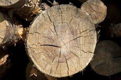 Wood log cut Royalty Free Stock Photos