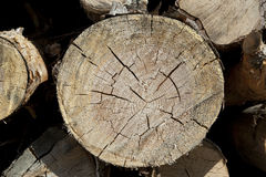 Wood log cut Stock Images