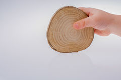 Wood Log cut in round thin pieces in hand Royalty Free Stock Image