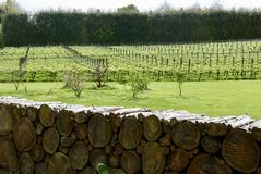 Wood log fence with view over vineyard Stock Photos